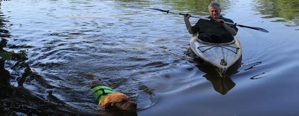Man Kyaking With Swimming Dog